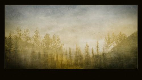 Rain-Forest-TapestryW1-500x281
